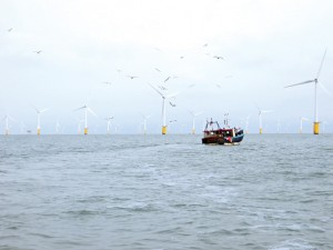 A Ramsgate-based gillnetter fishes outside of the boundaries of the Thanet Offshore Wind Farm.  The turbines in the background represent only a few of the 100 that make up the farm.  Each is mounted on a concrete-filled steel monopile hammered into the seabed for a total height of 377'.  (Lorelei Stevens photo)