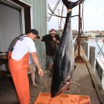 Steven Kennedy photo Offloading a giant bluefin from the 35' Lily in Gloucester in 2011.