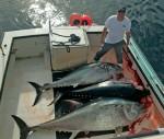 page-20--bluefin-F_V-Lily
