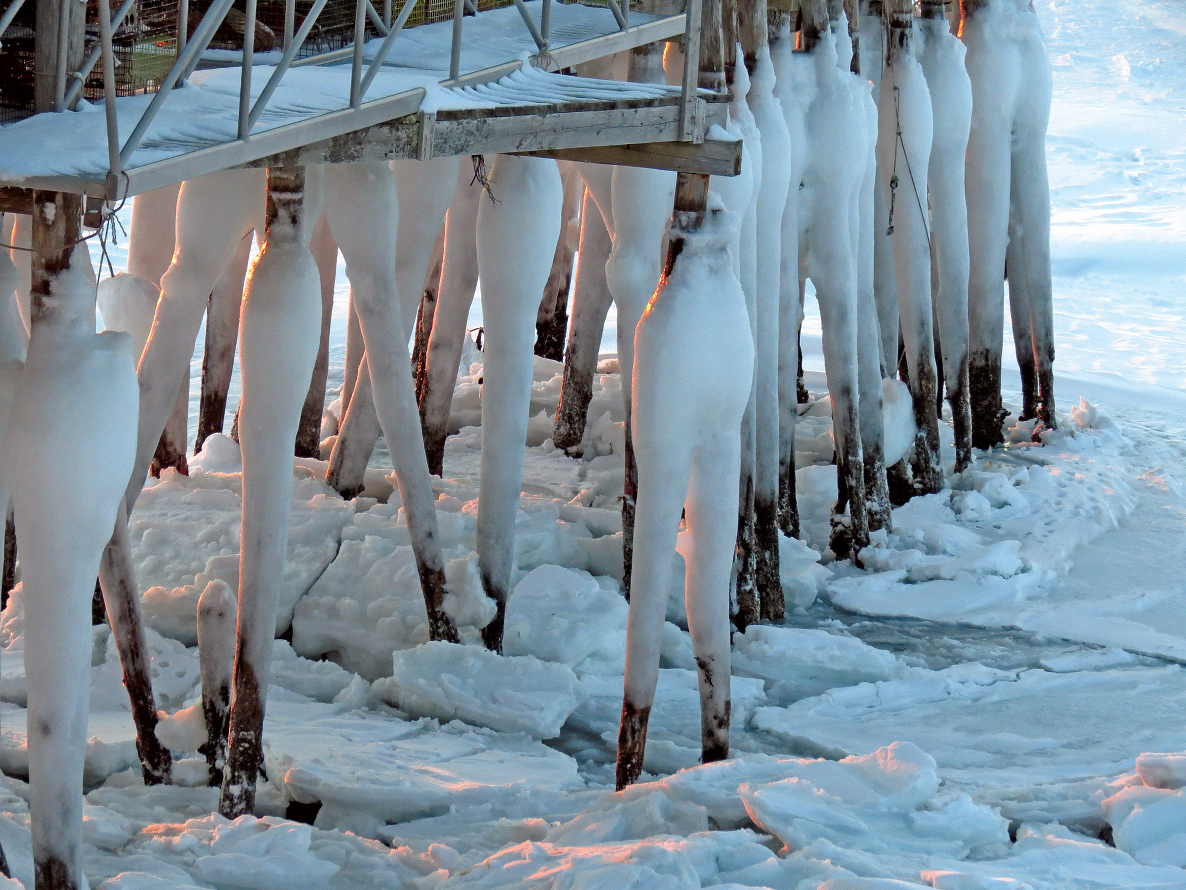 After a while the formations of ice on the pilings of TLC wharf began to look to me like human legs wearing white long-johns.  (Diane Cowan photo)