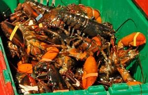 lobsters-tote
