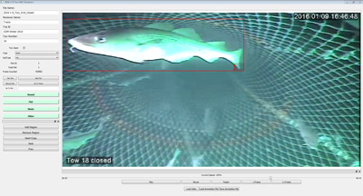 Fig 2.  Post-processing software counting fish passing through trawl. (Graphic courtesy of Kevin Stokesbury/UMass Dartmouth)